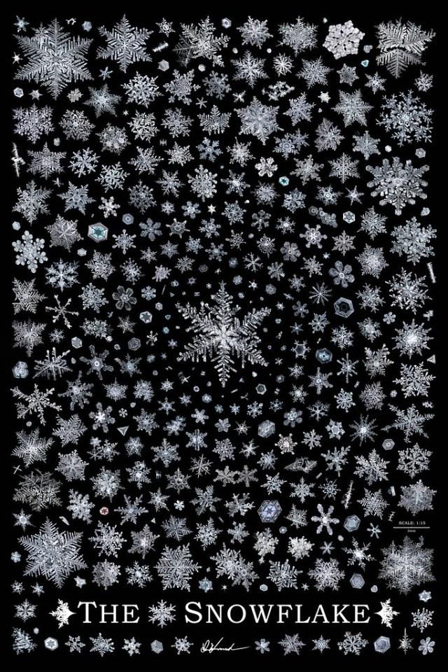 The Snowflake, ultra high resolution snowflake poster by Don Komarechka