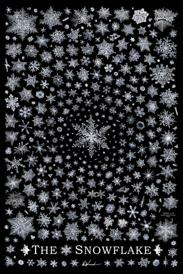 The Snowflake, ultra high resolution snowflake poster by Don Komarechka
