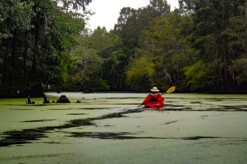 Sparkleberry Swamp with LCU-28