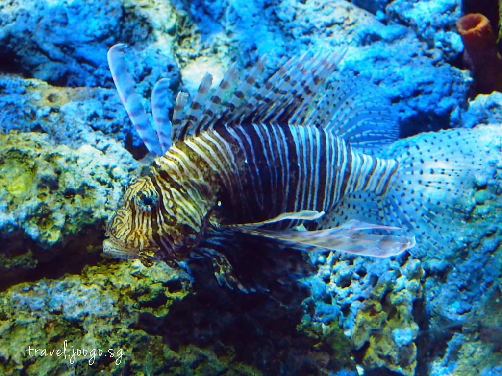 travel.joogo.sg - SEA Aquarium 19
