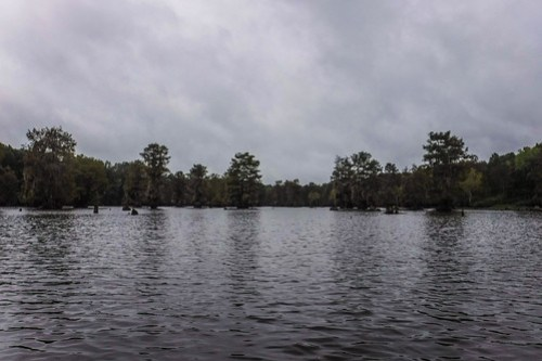 Sparkleberry Swamp with LCU-20