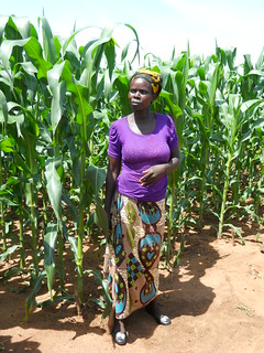 Farmer Agness Phiri has had first experience with herbicides forweed control and highlighted great labour savings for weeding for women and children when applying such products Photo credit: Christian Thierfelder/CIMMYT