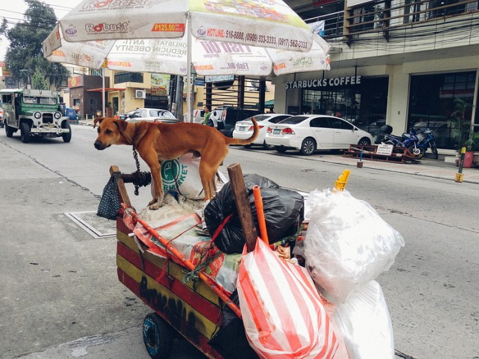 dog on a push cart with plastic bags