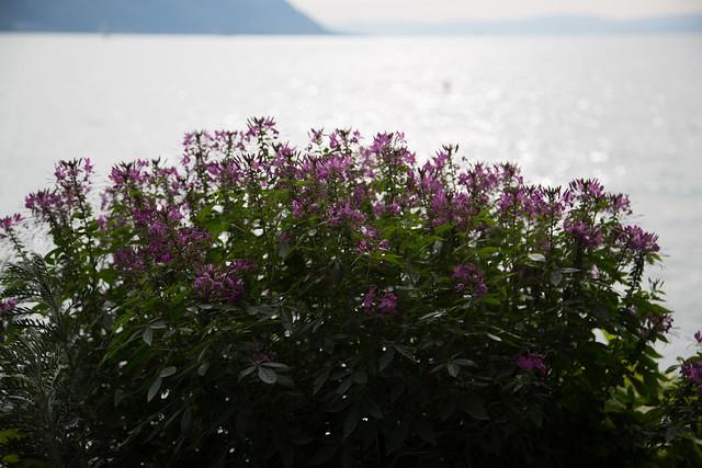 Lake Leman & Montreux