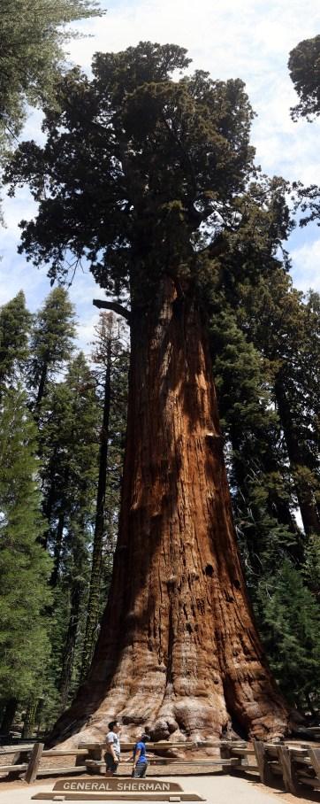 General Sherman Tree (15 Awe-Inspiring Things to Do in Sequoia National Park).