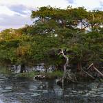 02 Viajefilos en Australia, Kakadu NP 107