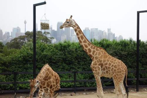 01 Sydney & Jervis Bay-27 Taronga Zoo