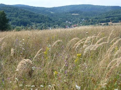 Zejście przez łąki do Krzeczkowej by Polek