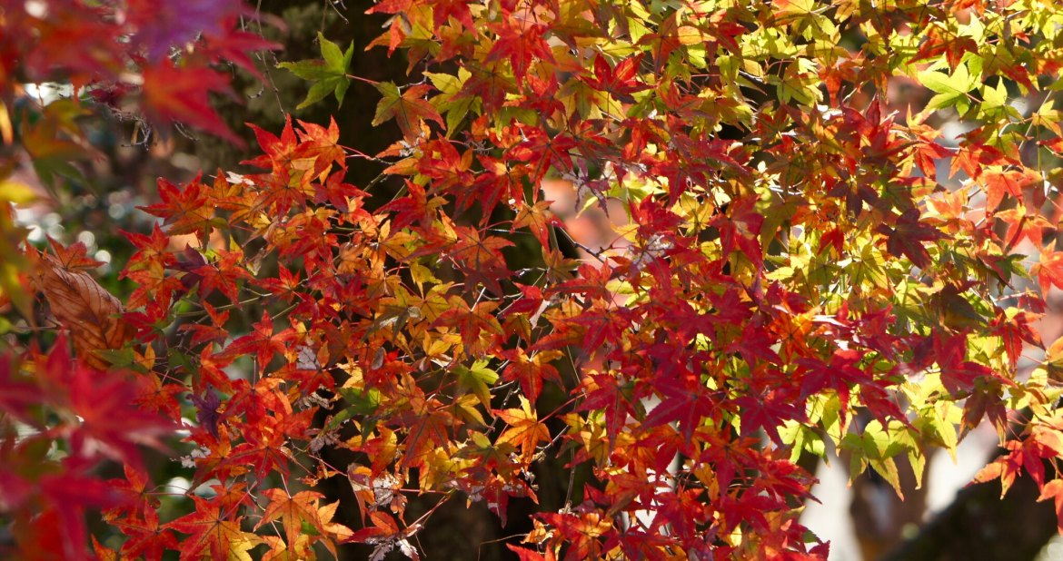 Rikugien Autumn Colors