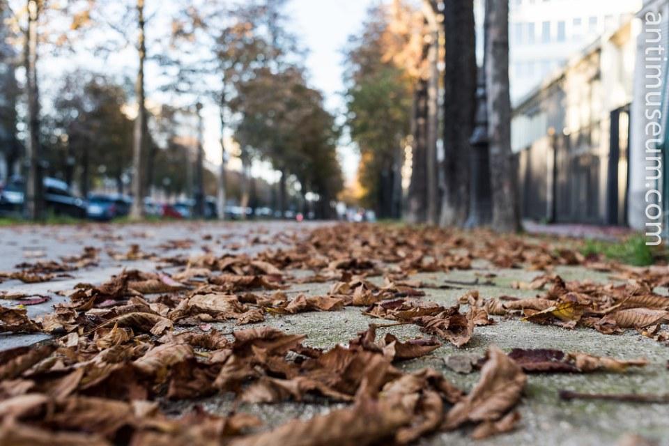 16-autumn-30102016-5471.jpg
