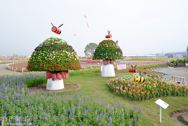 2015台中新社花海06