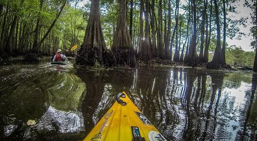 Sparkleberry Swamp with LCU-199