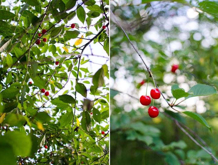 wild_cherries