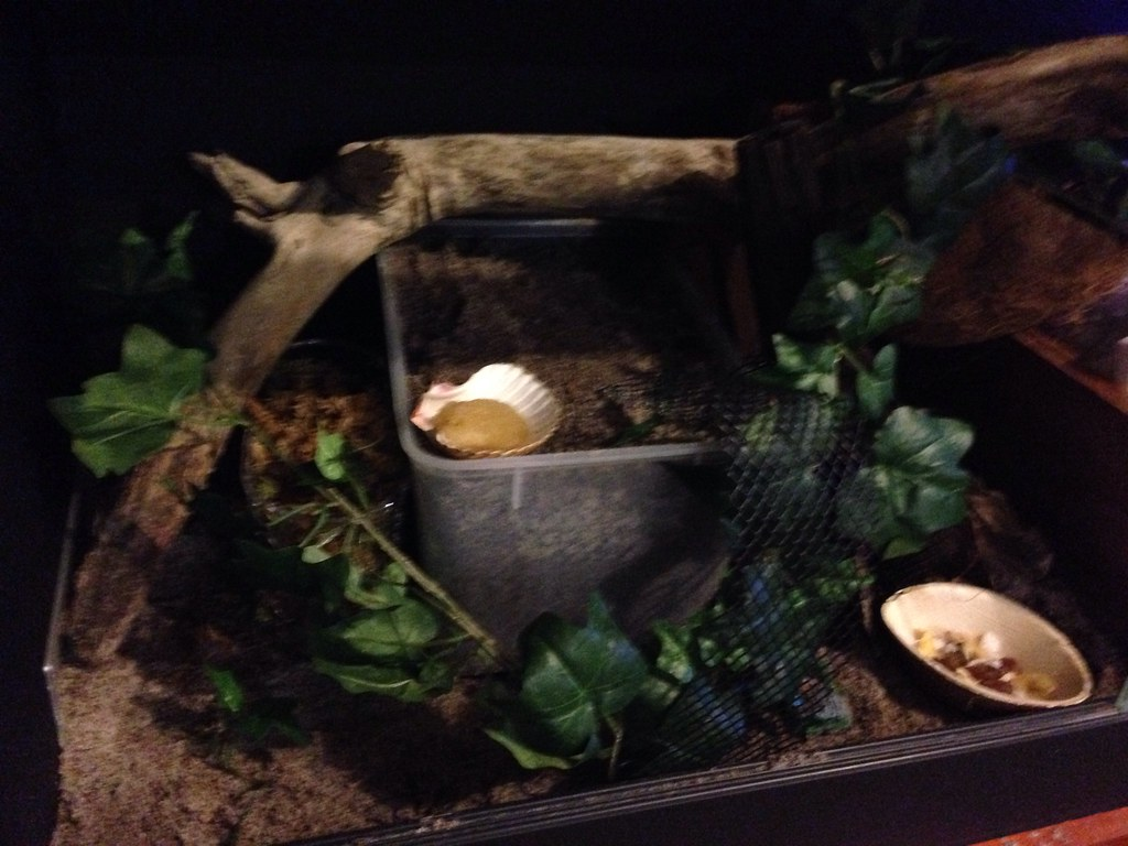 Tub full of sand / coco peat aka Eco earth for crabs to dig down on left hand side of tank