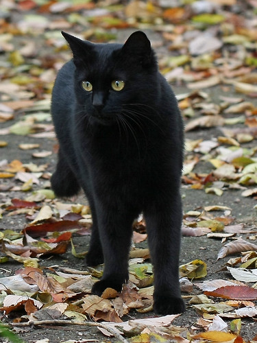 Street Cat at Jindai Aquatic Plant Garden(Tokyo, Japan)