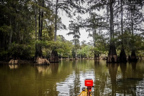 Sparkleberry Swamp with LCU-113