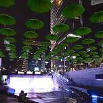 28 Corea del Sur, Seul noche  05