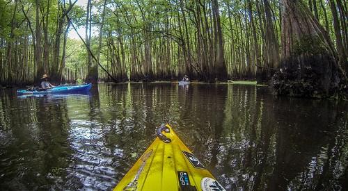 Sparkleberry Swamp with LCU-186