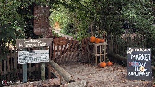 Southlands Heritage Farm Pumpkin Patch, Vancouver