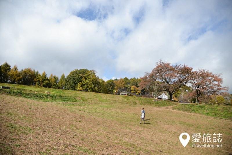 《日本长野景点》大峰高原七色枫,200年树龄矗立山头