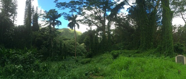 Picture from Manoa Falls Trail