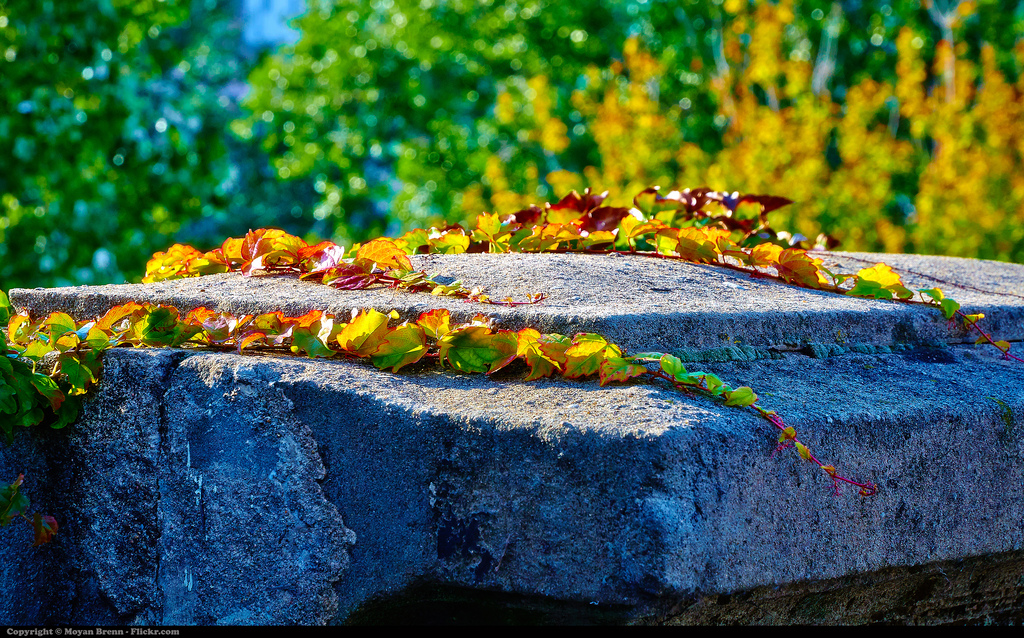 Imagen gratis de hiedra sobre una piedra