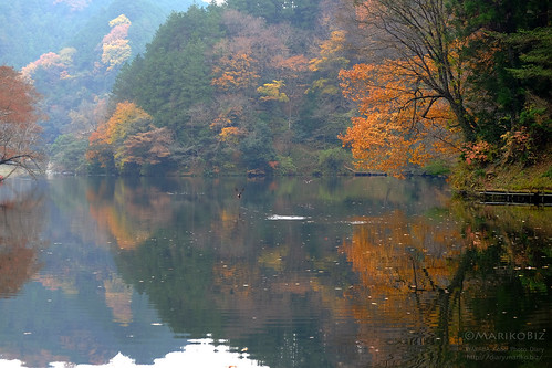 鎌北湖 20151210-DSCF8958_1