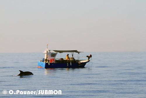 barca pesca delfin