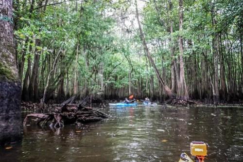 Sparkleberry Swamp with LCU-67