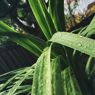Rain on Plants is a beautiful thing