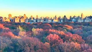 Autumn Sunlight on golden brown Central Park