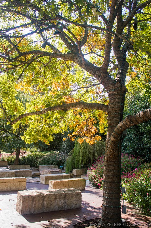 Dallas Autumn at the Arboretum