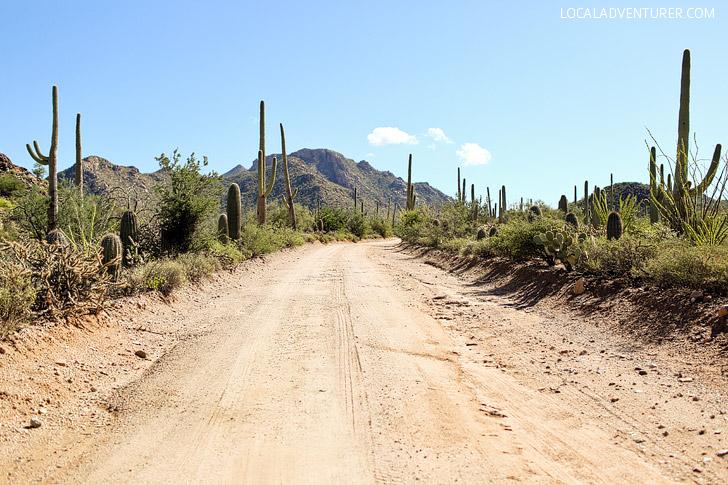 Bajada Loop Drive (11 Beautiful Things to Do in Saguaro National Park).