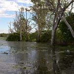 02 Viajefilos en Australia, Kakadu NP 051