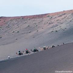 #tourism in #lanzarote #camel #rides in a #national #park #españa #wanderlust #travel #travelgram #vsco #vscocam #guardiantravelsnaps #vulcano #hills