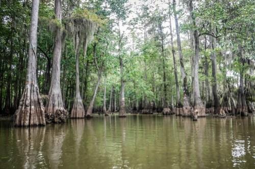 Sparkleberry Swamp with LCU-118