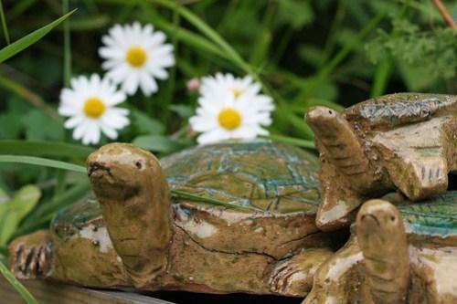 Daisy and Turtle(Atsugi, Japan)