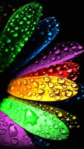 wallpaper-full-hd-1080-x-1920-smartphone-colorful-petals