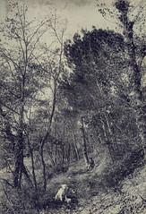 Saint-Rémy-de-Provence - Janvier 1903