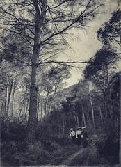 Saint-Rémy-de-Provence - Avril 1904