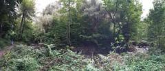 Trees in a ravine, Toronto