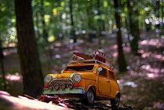 Adventure in woods