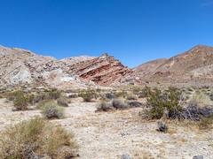 Wander to Ancient Bristlecones