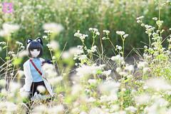 白いお花畑