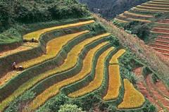 Vietnam (2019)