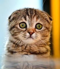 1-cat-NZ6_5145