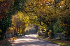 Autumn #2. Cheshire Lane