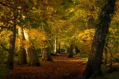 Autumn #4. Woodland Walk