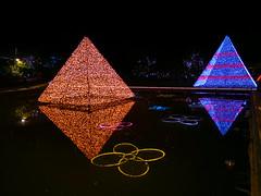 Ashikaga Flower Park Light Up in Japan