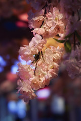 Pattaya Thailand Mall-Flowers